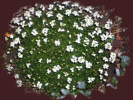 FOTKA - Brzy bude bílý kobereček