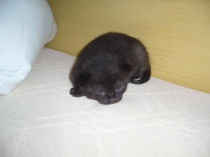 FOTKA - maličký černý
