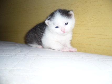 FOTKA - maličký bíločerný.