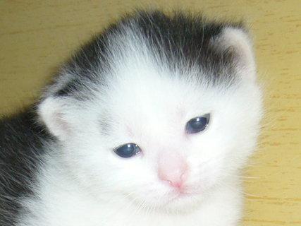 FOTKA - Hlavička koťátka