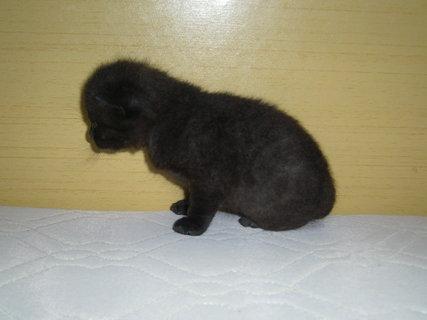 FOTKA - maličký černý..