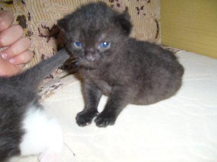FOTKA - maličký černý...