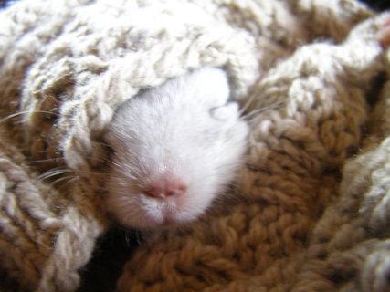 FOTKA - činčilý miminko