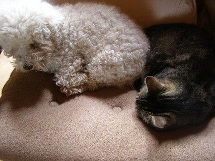 FOTKA - polední siesta