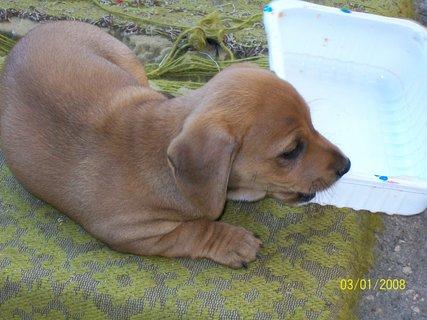 FOTKA - První štěně