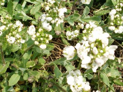 FOTKA - něžné bílé kvítky