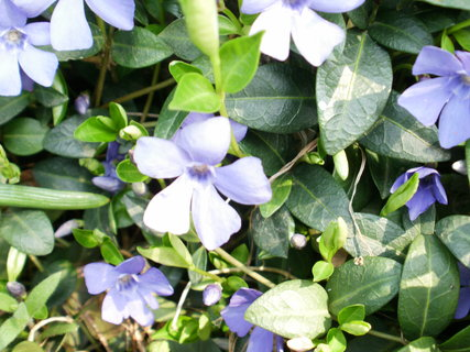 FOTKA - něžná modroučká