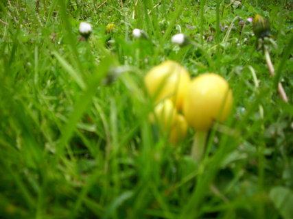 FOTKA - U nás první jarní houby