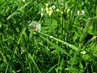 kapky deště v trávě