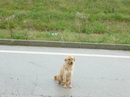FOTKA - v Srbsku - pejsek tulák je jich tam strašně moc