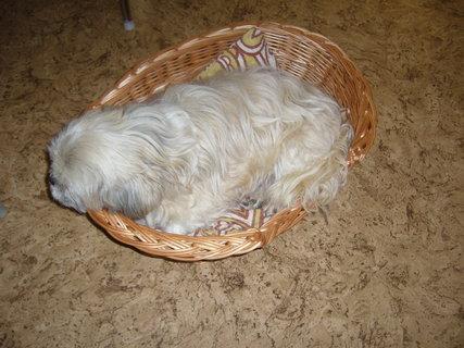 FOTKA - To je můj pelíšek