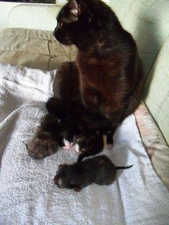FOTKA - Čtyři včera narozený koťátka