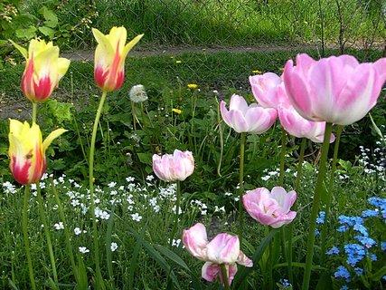 FOTKA - Trocha plevele je přidá na kráse šlechtěných květin, proto moc nepleju....