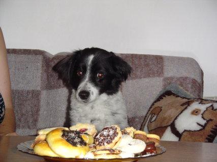 FOTKA - Bobíček a koláče
