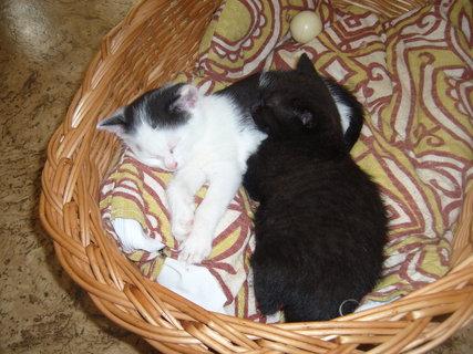 FOTKA - koťátka nová 2