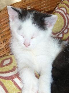 FOTKA - koťátka nová 5