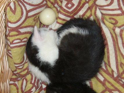 FOTKA - koťátka nová 6