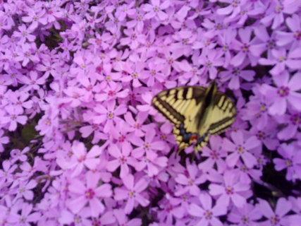 FOTKA - Motýlek na skalce