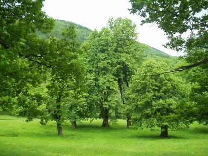 FOTKA - Příroda v parku