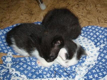 FOTKA - koťátka nová 7
