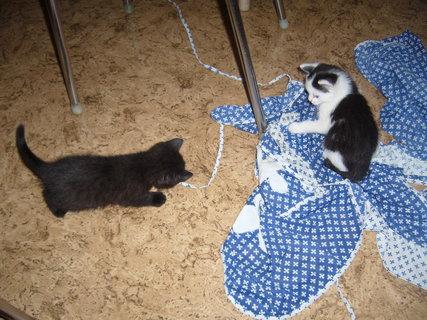 FOTKA - koťátka nová 8