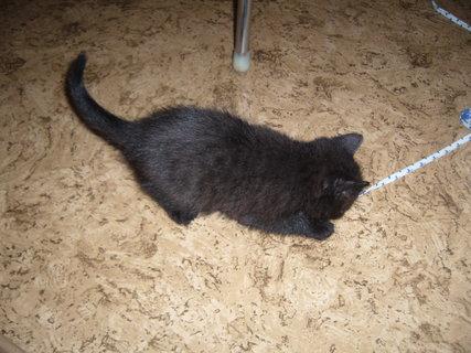 FOTKA - koťátka nová 9