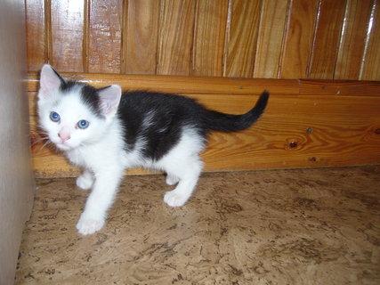 FOTKA - koťátka nová 10