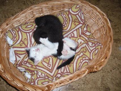 FOTKA - koťátka nová 11