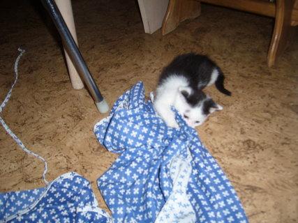FOTKA - koťátka nová 12