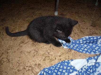 FOTKA - koťátka nová 13