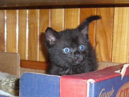 FOTKA - koťátka nová 15