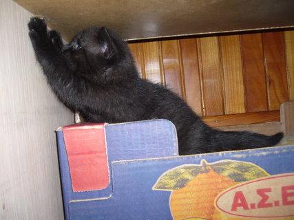 FOTKA - koťátka nová 17