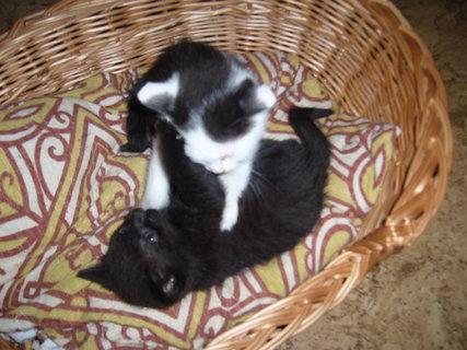 FOTKA - koťátka nová 18