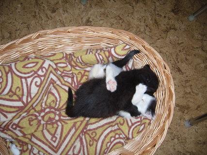 FOTKA - koťátka nová 19
