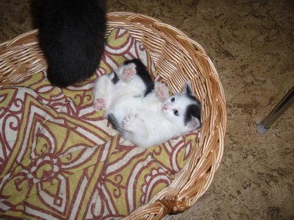 FOTKA - koťátka nová 20
