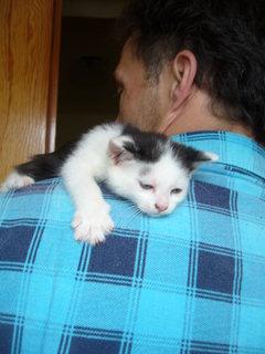 FOTKA - koťátka nová 22
