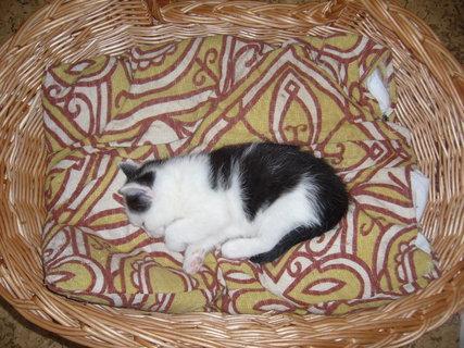 FOTKA - koťátka nová 23