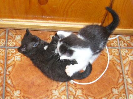 FOTKA - koťátka nová 25