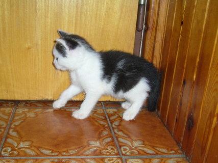 FOTKA - koťátka nová 26
