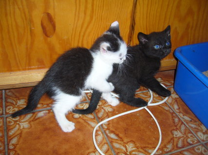FOTKA - koťátka nová 29