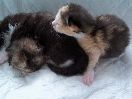 FOTKA - 8 den koťátek.
