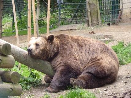 FOTKA - Medvěd z večerníčku Méďové