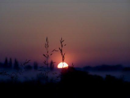 FOTKA - I tráva se těší na teplo