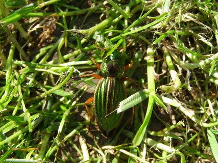 FOTKA - mimikry hmyzu