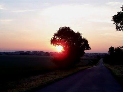 FOTKA - Strom svítání