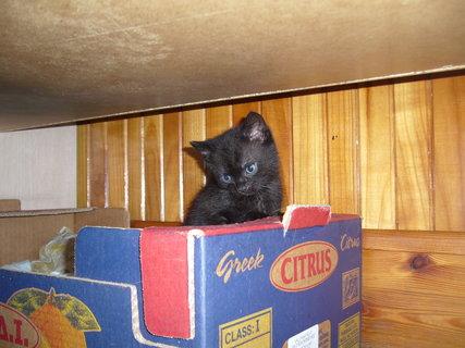 FOTKA - koťátka nová 30