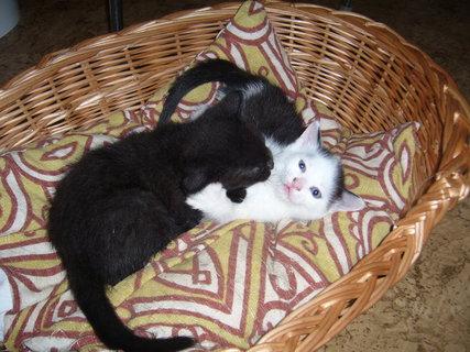 FOTKA - koťátka nová 32