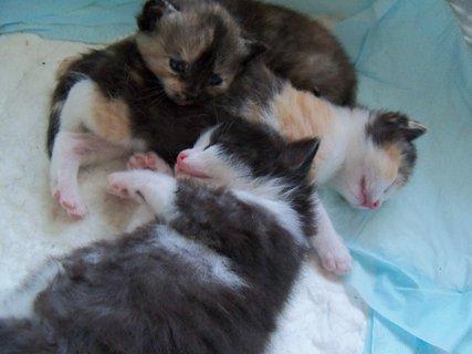 FOTKA - Koťata 19 dnů