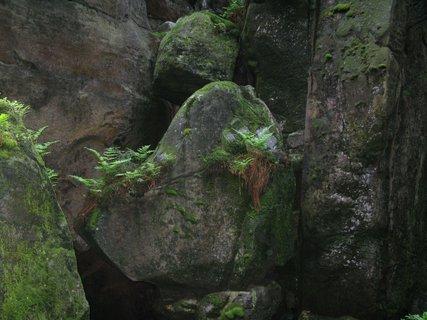 FOTKA - Skalní útvar - Hlava psa