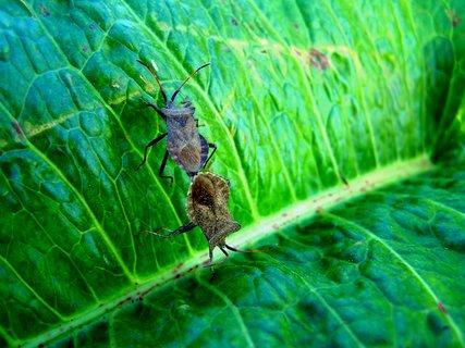 FOTKA - Šmírování cvrčků